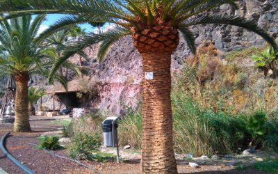 Comienza el embellecimiento de los taludes en Gran Tarajal